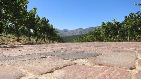 Glenwood Vineyards : natuur op zijn mooist