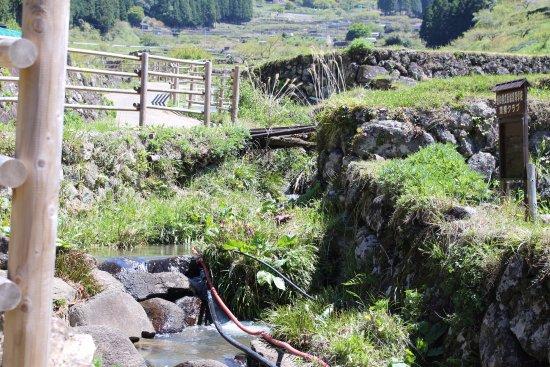 Yotsuya no Semmaida: 棚田の真ん中に流れる小川