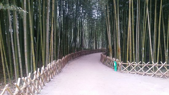 Ulsan, South Korea: Taehwa River Seepri Bamboo Grove