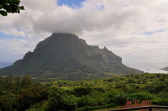 Moorea, Polinesia Francesa: Opunohu Valley, pineapple fields and Mount Rotui!