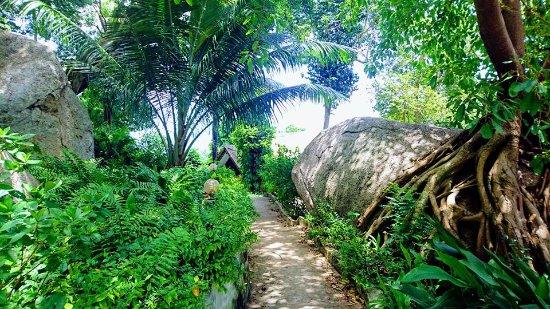 Mango Bay: Chemin d'accès pieton