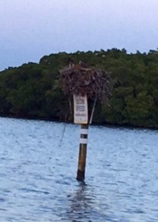 Ophelia's on the Bay : Birds nest about 20 feet from the dining deck
