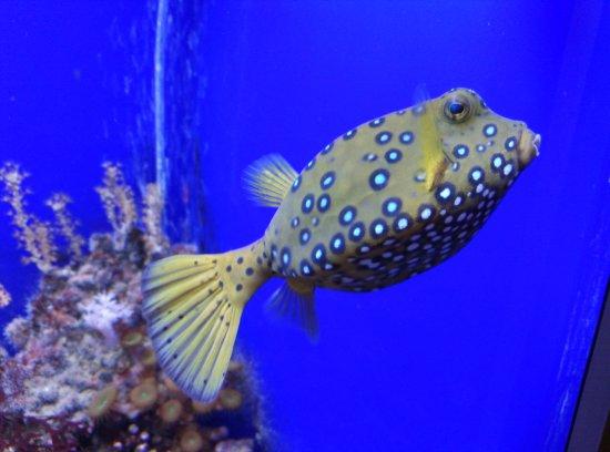 acquario 1 - foto di acquario di genova, genova - tripadvisor