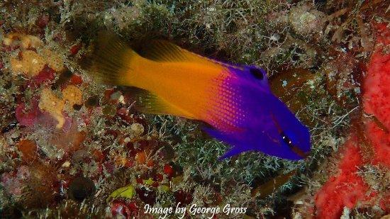 Valentine's Dive Center: Sea Garden