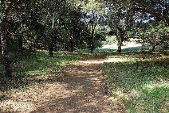 Los Altos Hills, CA: shade from Oaks