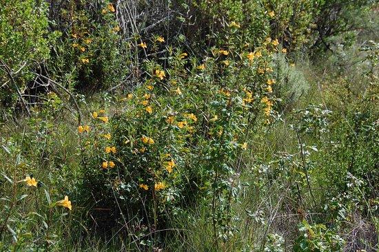 Los Altos Hills, CA: lots of wild flowers