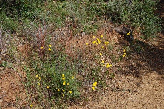 Los Altos Hills, แคลิฟอร์เนีย: lots of wild flowers
