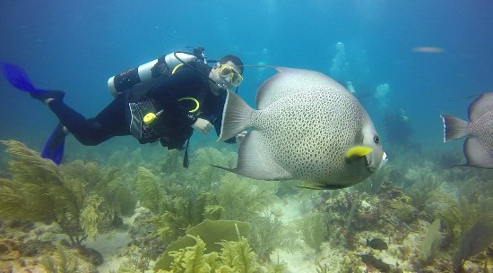Always Diving & Water Sports: Diving in Puerto Morelas