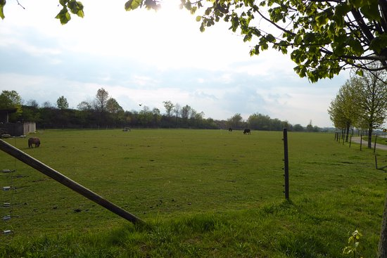 Leipheim, Germany: their meadow