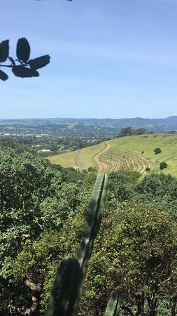 Napa Valley, Kaliforniya: High in the hills of Napa