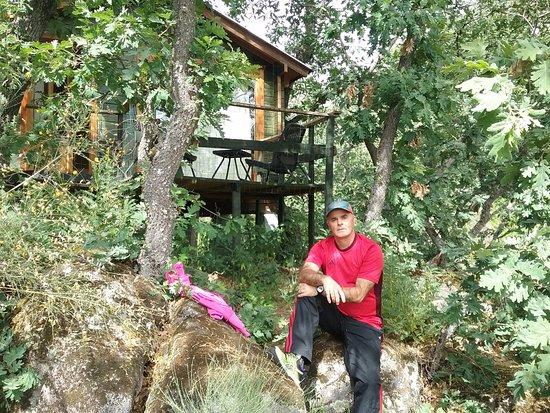 cabaas en los rboles de extremadura esta foto es de la cabaa musgo