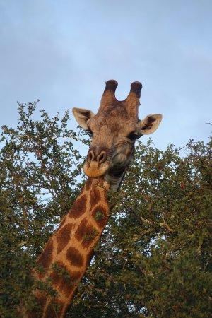 Foto de Londolozi Private Game Reserve