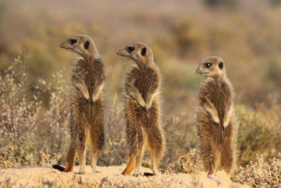 Meerkat Adventures: photo1.jpg