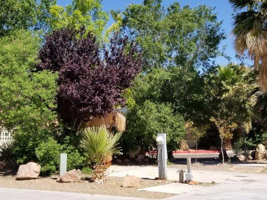 Landscape - Picture of Nevada Treasure RV Resort, Pahrump - Tripadvisor
