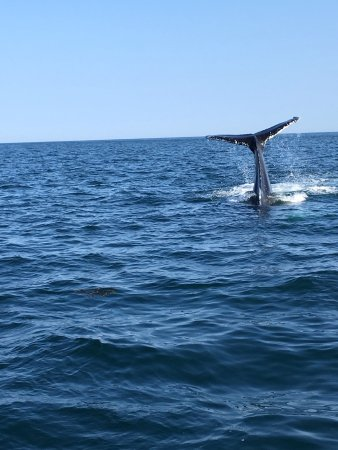 Truro, MA: Custom Whale Watch. Let's you get close to the action!