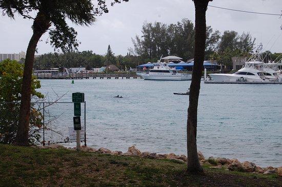 Jupiter, Floride : Dolphins visible!