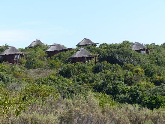 Garden Route Game Lodge: ...mit Blick aufs Wasserloch...