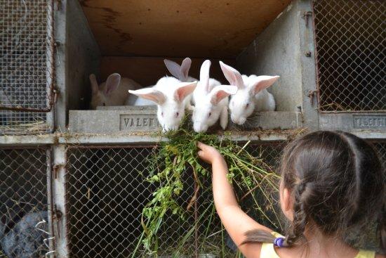 Saint-Bonnet en Champsaur, Frankreich: Lapins ferme de la Mourière