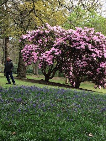 Calne, UK: Bowood Woodland Gardens