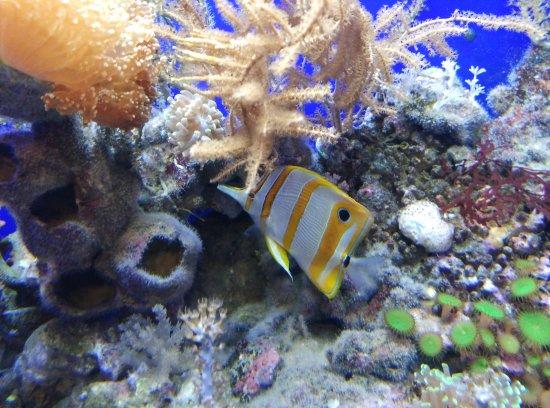acquario di genova - foto di acquario di genova, genova - tripadvisor