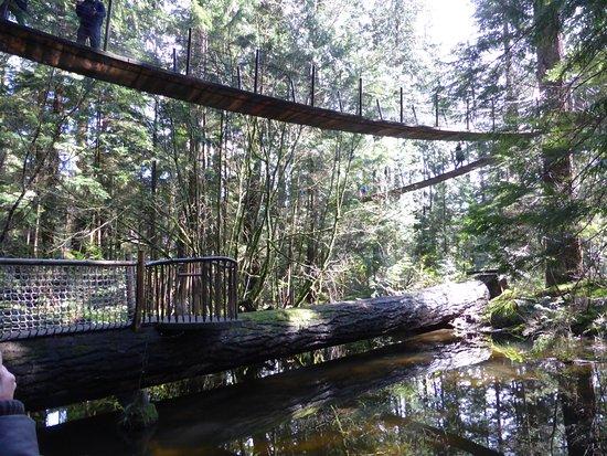 North Vancouver, Canada: The tree top walk