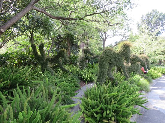 crazy topiary picture of royal botanic gardens melbourne