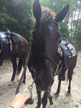 Inlet Point Plantation Stables: Layla (awesome mare)