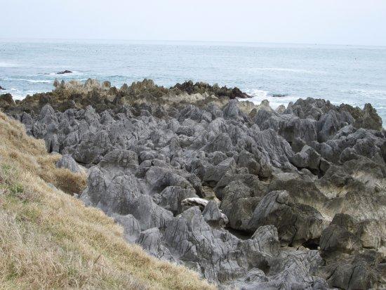 Iwaisaki Limestone Fossil: 岩井崎の岩です。