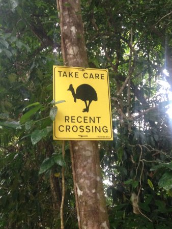 Daintree Discovery Centre: Keep your eyes peeled for Cassorwaries
