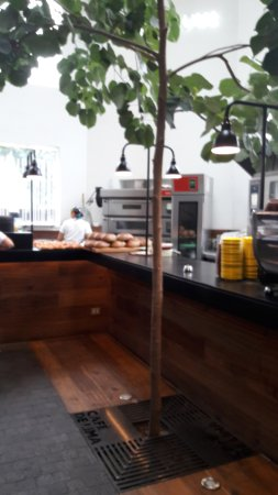 Foto de cafe de lima lima arbol en el interior tripadvisor for Arbol interior