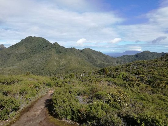 Great Barrier Island, Nya Zeeland: Track between Windy Canyon and the Summit climb.