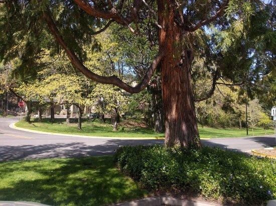Lithia Park: Parte del parque