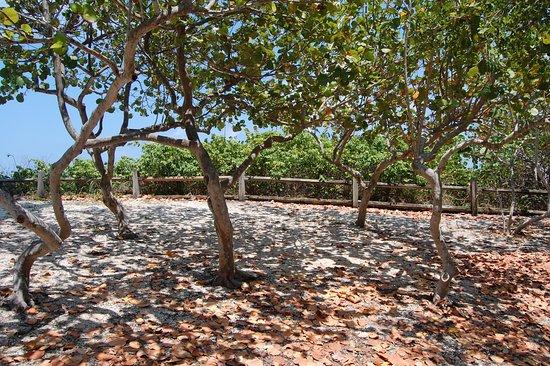 Dubois Park: dappled shade along a trail