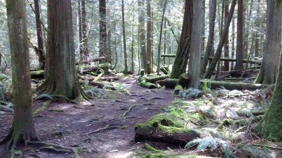 Roberts Creek, Canadá: Beautiful creeks and waterfalls !