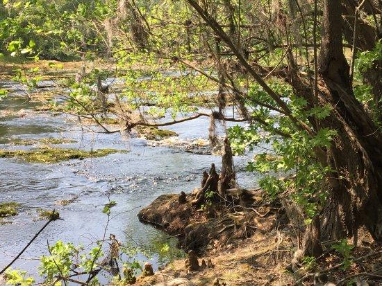 White Springs, FL: photo2.jpg