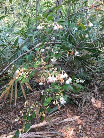 White Springs, FL: photo4.jpg