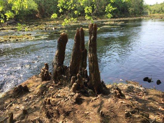 White Springs, FL: photo5.jpg
