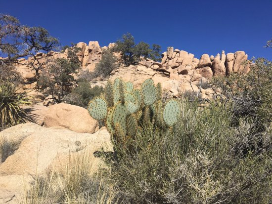 Indian Cove Campground: Desert views everywhere