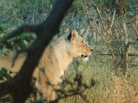 Muweti Bush Lodge: Maravillosos días a las puertas de Kruger, al que pudimos acercarnos durante el día entre game d