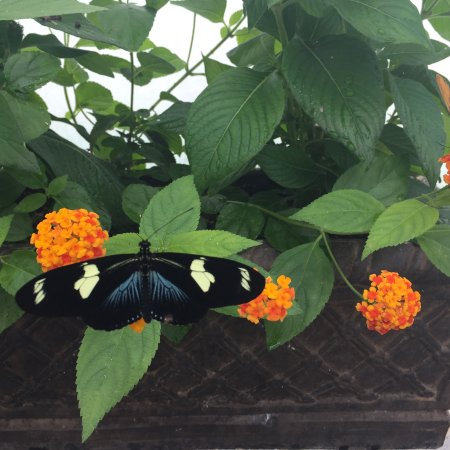 Butterfly Exhibit Picture Of Lewis Ginter Botanical Garden Richmond Tripadvisor