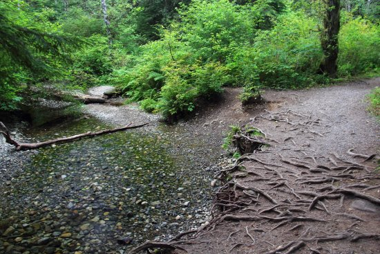 Mission, Canada: Small creek on the trail around the lake