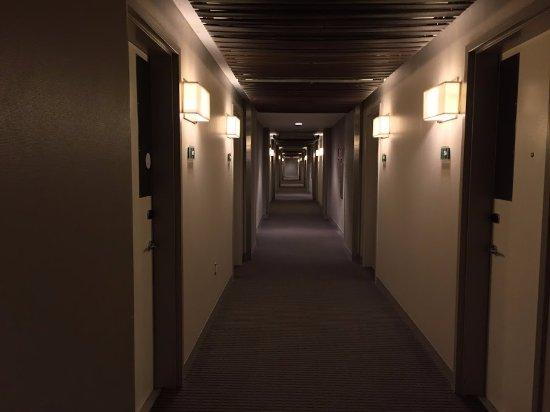 The Interior Corridors At The Element Lexington