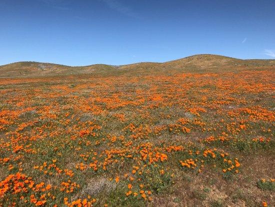 Antelope Valley California Poppy Reserve: photo0.jpg