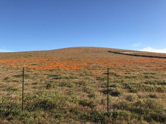 Antelope Valley California Poppy Reserve: photo1.jpg