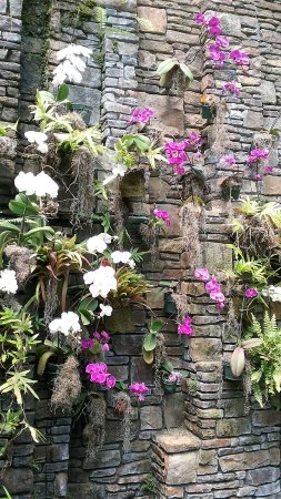 Belmont, Carolina del Norte: Orchid wall