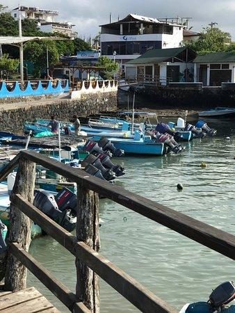 Picture of santa cruz fish market puerto for Santa cruz fishing
