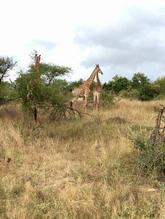 Wild Wings Safaris: photo5.jpg