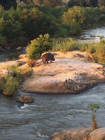 Wild Wings Safaris: photo8.jpg