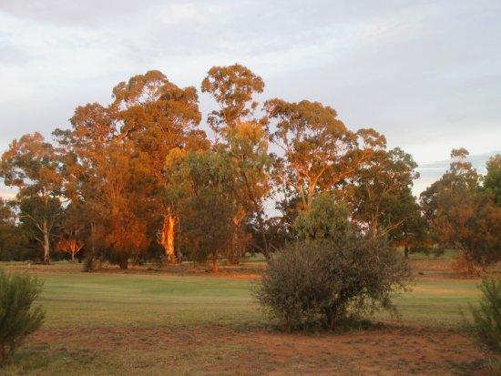 Loxton Golf Club