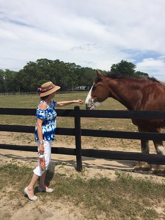 Weirsdale, FL: Horses on the property